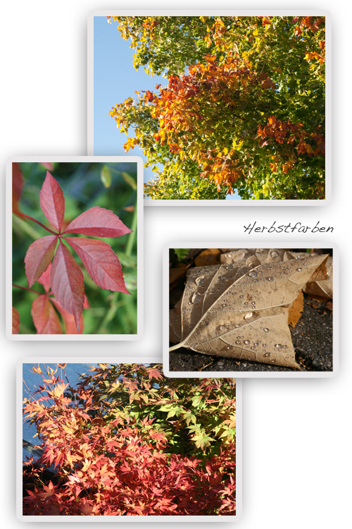Herbstfarben-Goldgelb-Rot