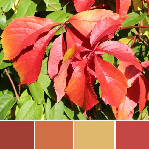 Stimmung-Herbst-Herbstfarben