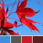 farbimpressionen-Rot-Blau-Herbst