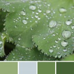 farbinspirationen-gruen-natur-regentropfen