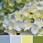 farbinspirationen-gruen-natur-hortensie-blau