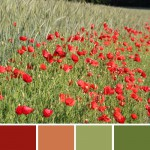 farbinspirationen-gruen-natur-mohn-rot