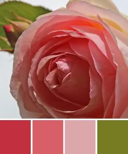 farbinspirationen-natur-Rosa-rose