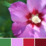 farbinspirationen-natur-Hibiskus-pink-lila