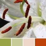 farbinspirationen-natur-Lilien-weiss