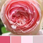 farbinspirationen-natur-Rosa-rose1