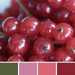 farbinspirationen-Beerentoene-johannisbeeren-pink-rot1