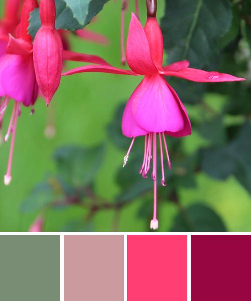 farbinspirationen-natur-fuchsien-pink-lila