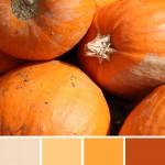 farbinspirationen-natur-herbstfarben-kuerbis-orange