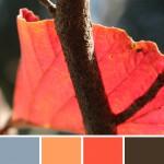 farbinspirationen-natur-herbstfarben-laub-orange