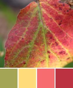 farbinspirationen-natur-herbstfarben-rot-gruen