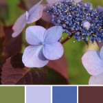 farbinspirationen-natur-herbst-aubergine-lila