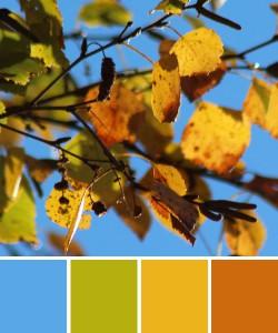 farbinspirationen-natur-herbstfarben-laub-gelb