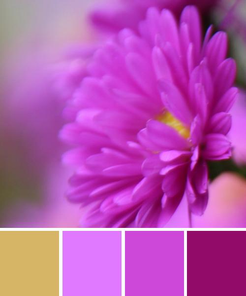 farbinspirationen-natur-aster-pink-violett