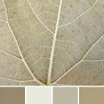farbinspirationen-natur-herbstfarben-grau-beige