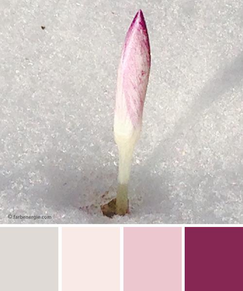 farbinspirationen-natur-Schnee-krokus