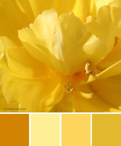 farbinspirationen-Fruehling-Gelb-Tulpen