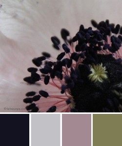 farbinspirationen-Schwarz-Weiss-Rose1