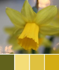 farbinspirationen-fruehling-gelb-gruen-Osterglocke