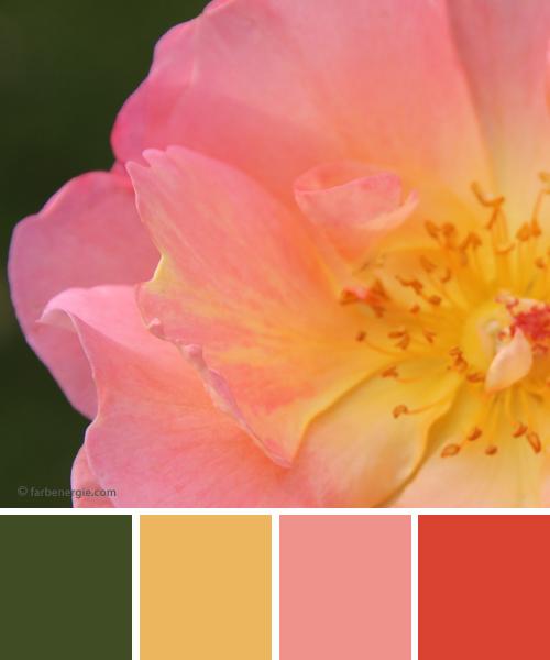 farbinspirationen-Buttergelb-Rose-zinnoberrot