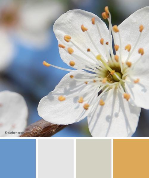 farbinspirationen-Fruehlingsblueten-weiss-himmelblau
