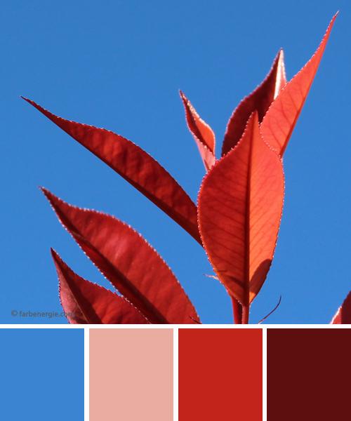 farbinspirationen-Himmelblau-Fruehlingsrot-Rosee