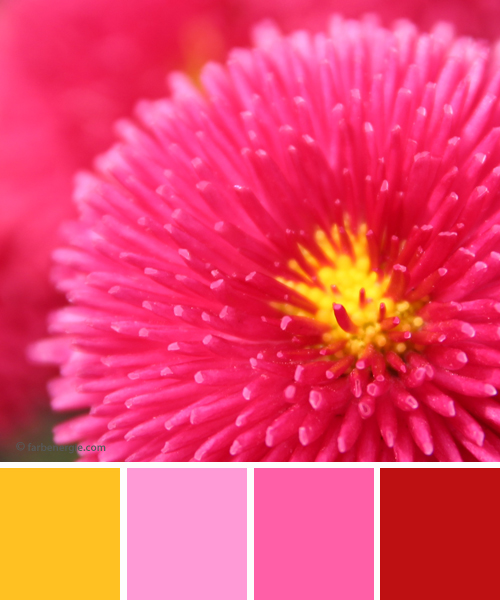 farbinspirationen-Magenta-Pink-Sonnengelb