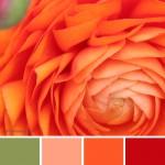 farbinspirationen-Orange-Apricot-Gruen
