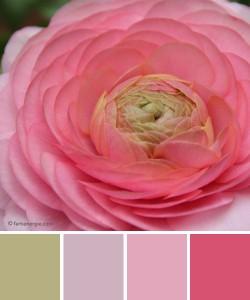 farbinspirationen-Rose-zartgruen