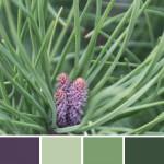 farbinspirationen-Gruen-Lila-Natur