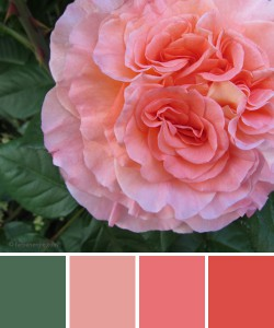 farbinspirationen-Gruen-Rose-Apricot