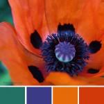 farbinspirationen-Mohnrot-Gruen-lila