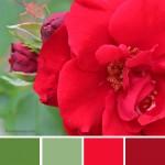 farbinspirationen-Rosenrot-Sommergruen