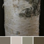 farbinspirationen-Birkenrinde-Naturtoene