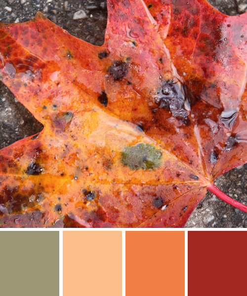 farbinspirationen-natur-laub-rot-orange