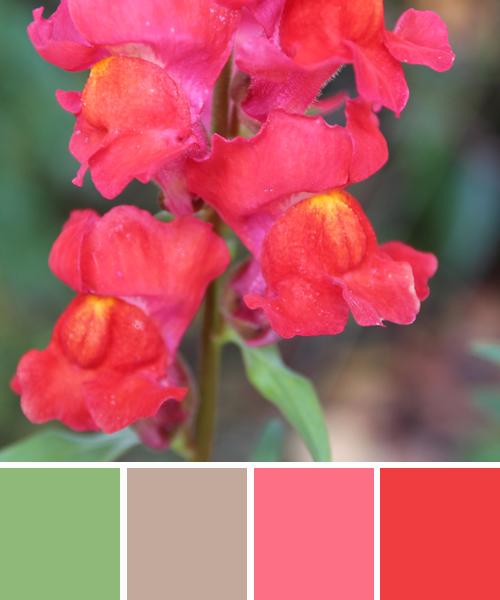 farbinspirationen-natur-loewenmaul-rosa-rot