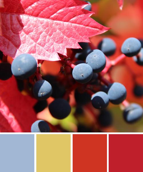 farbinspirationen-natur-weintrauben-laub