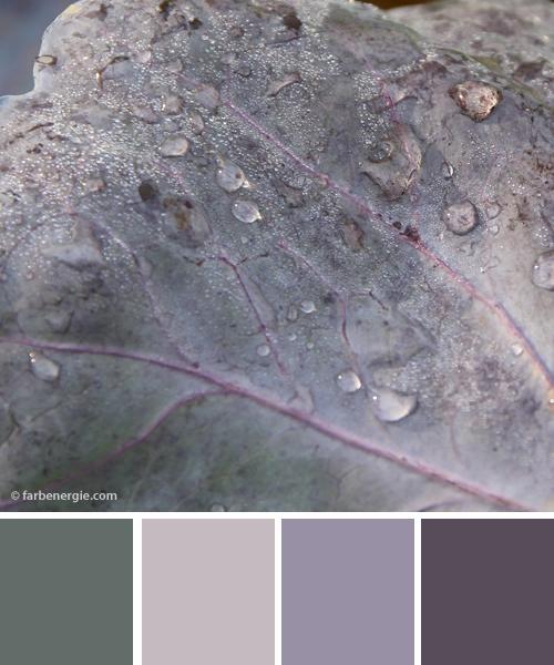 farbinspirationen-naturtoene-Blaukraut-Grau-violett