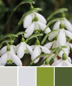 farbinspirationen-gruen-schneegloeckchen
