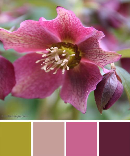 farbinspirationen-gruen-erika-fruehling