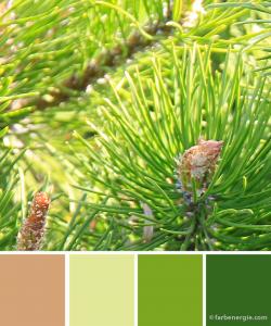 farbinspirationen-piniengruen-fruehling-sand-zitronengelb