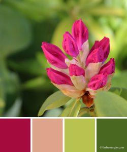 farbinspirationen-magenta-rose-piniengruen