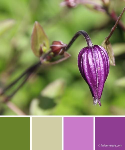 farbinspirationen-violett-rose-piniengruen