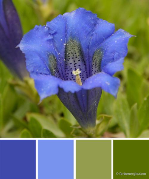 farbinspirationen-Enzianblau-Grasgruen