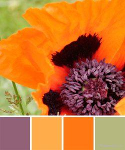 farbinspirationen-Mohn-orangerot-violett