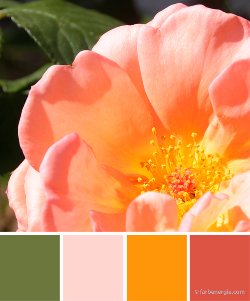 farbinspirationen-apricot-rose-moosgruen