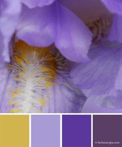 farbinspirationen-dunkellila-violett-senfgelb