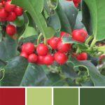 farbinspirationen-Weihnacht-Ilex-gruen-tomatenrot-