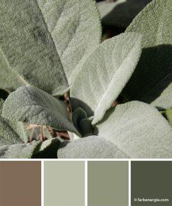 farbinspirationen-salbeigruen