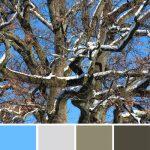 farbinspirationen-Winter-Eiche-weiss-blau-blaun